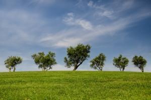 trees ntia